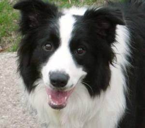 来自dog.blog.abc101.com的图片被盗