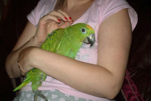 parrot-with-woman